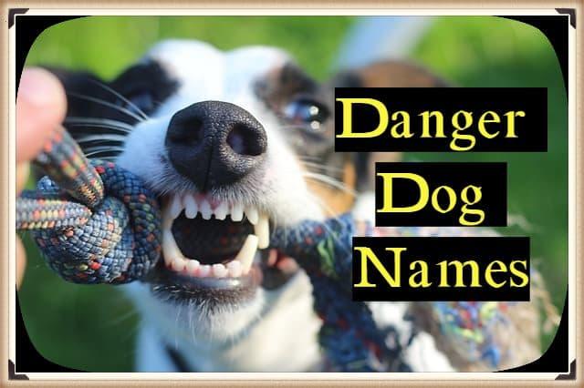 Danger Dog Names