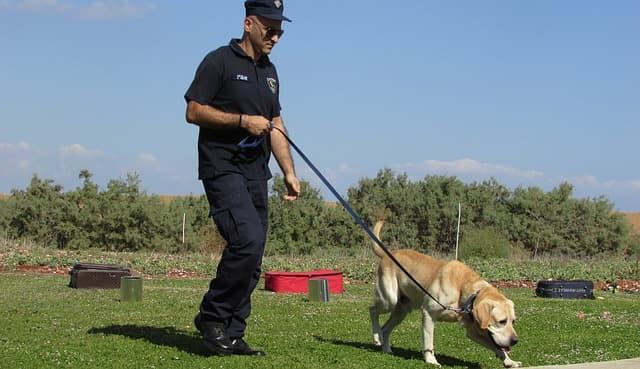 Tough Police Dog Names