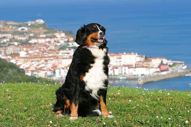 Badass Country Dog Names
