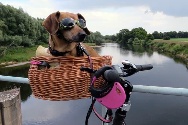 Biker Names for Girl Dogs