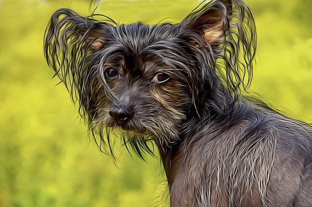 Chinese Crested Dog Names