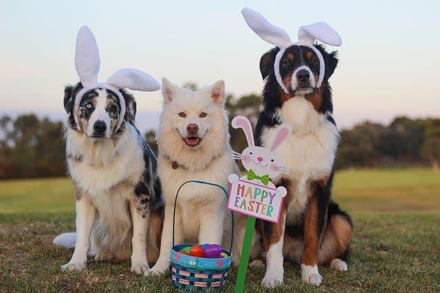 Easter Dog Names