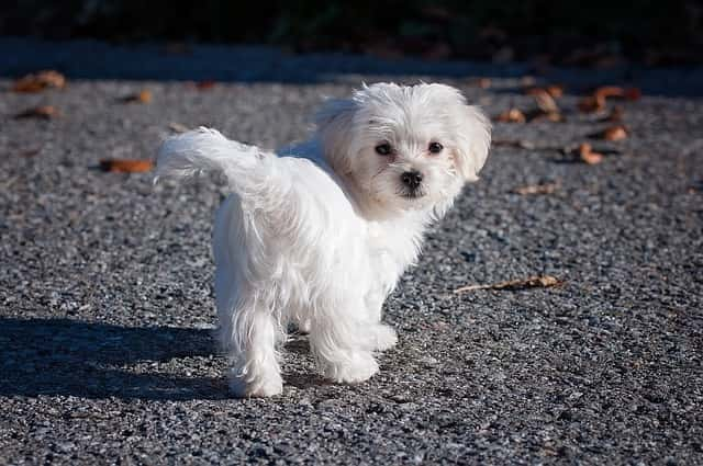 Names for White Dogs