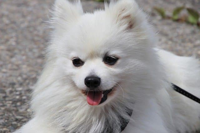 long haired white dog names