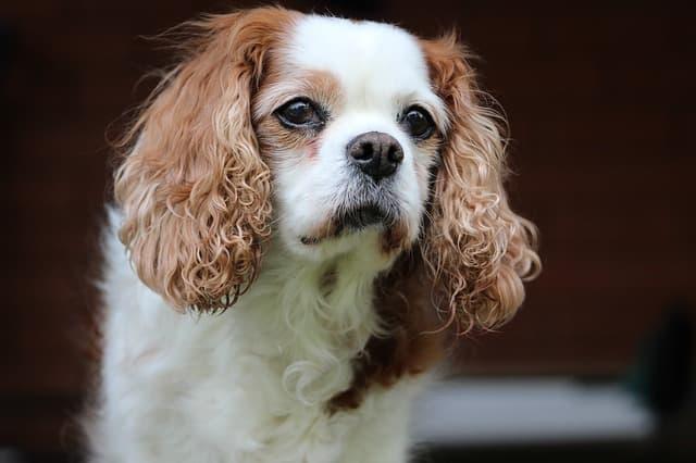 Fancy Female Dog Names