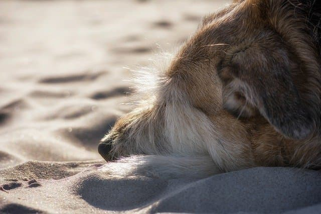 Salty Sea Dog Names