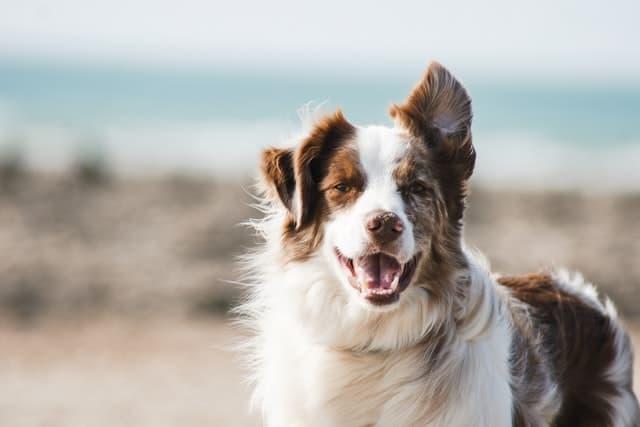 Top Uncommon Dog Names