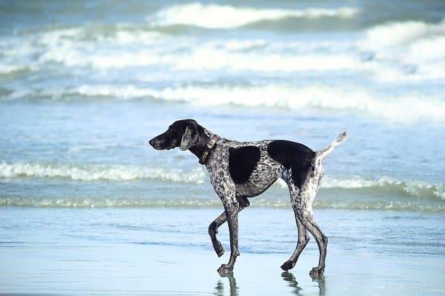 Beach Tropical Dog Names