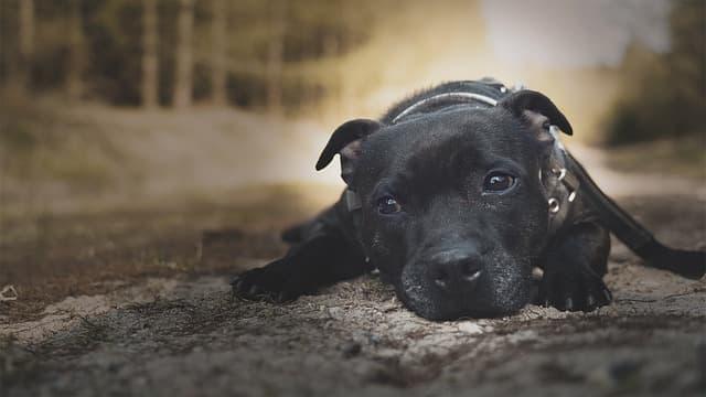 Black Cute Boy Dog Names