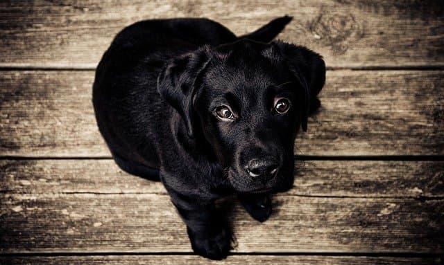 Black Female Dog Names