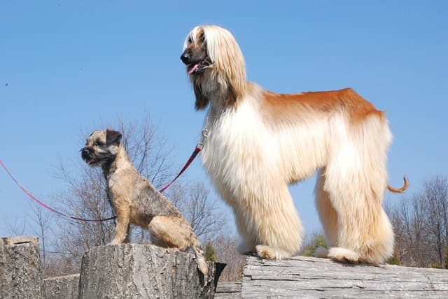 Cute Country Names for Girl Dogs