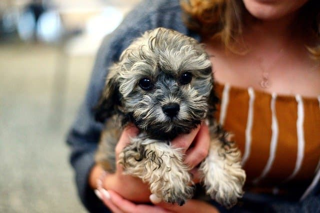 Cute D Dog Names
