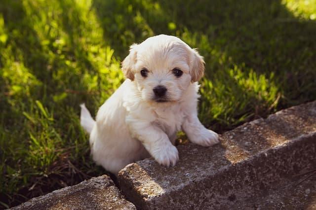 Exotic List of White Female Dog Names