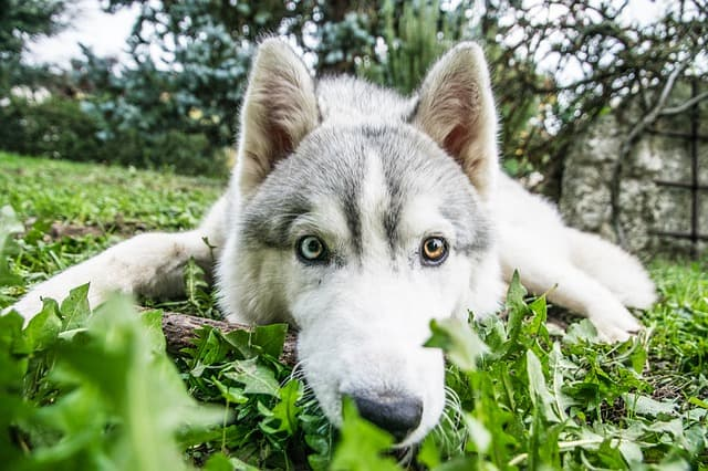 Inuit Husky Names for Dogs