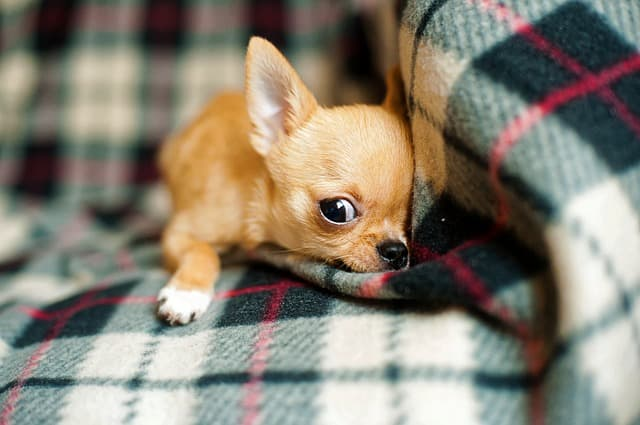Popular Puppy Names from Books, Cartoons, Comics