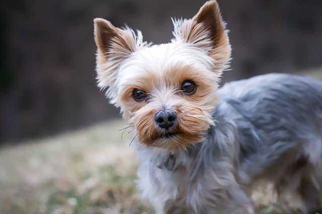 Small Female Dog Names
