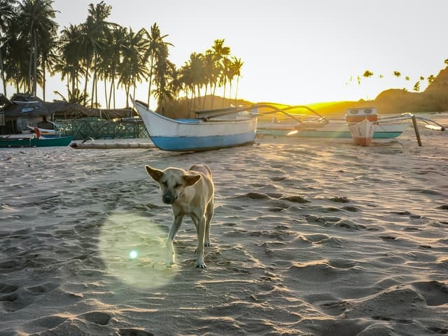 Tropical Island Names for Dogs