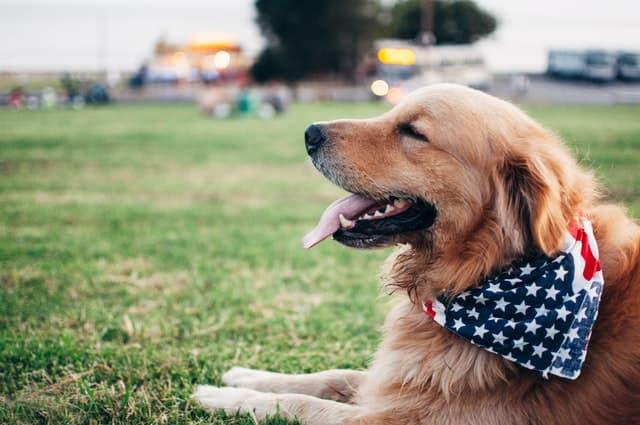 Unisex Patriotic Puppy Names