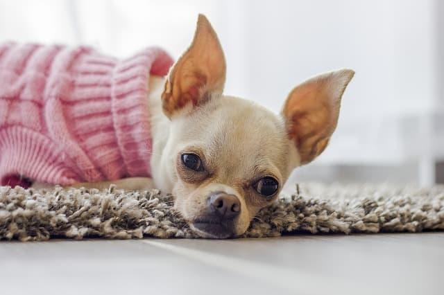 Unusual Tiny Female Dog Names