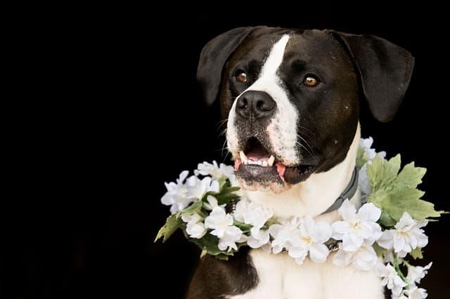 White Flower Names for Dogs