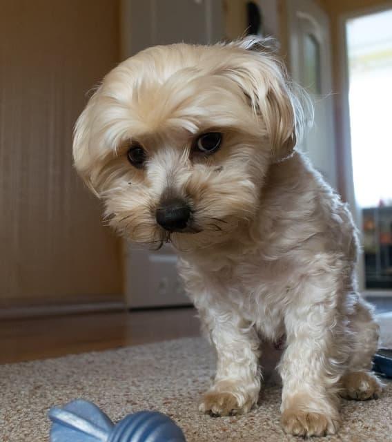 Cute Cream Colored Dog Names