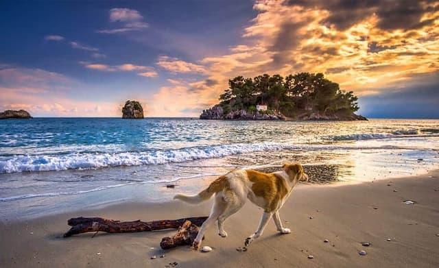 Greek European Dog Names