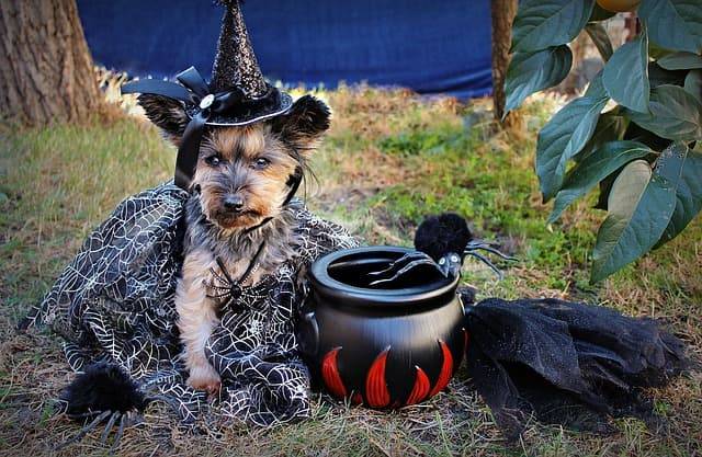 List of Magical Witch Dog Names for Male and Female Puppies