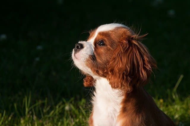 Small Dog Names and Meanings