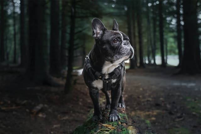 Nature Names for Black Female Dogs