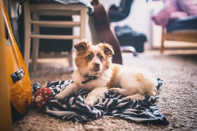 Punk Male and Female Dog Names