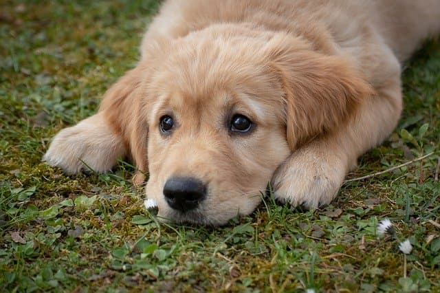 Boy and Girl Dog Names That Mean Blessing