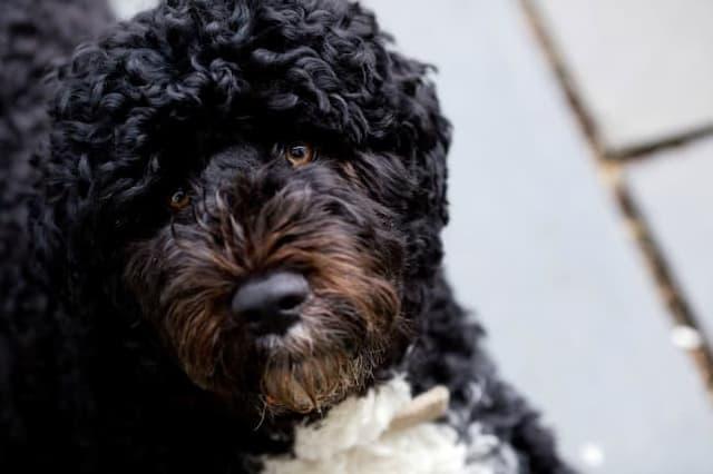 Brazilian Dog Names