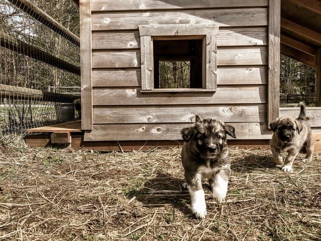 Livestock Guardian Dog Names