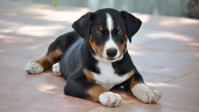 Medium Size Breed Dog Names