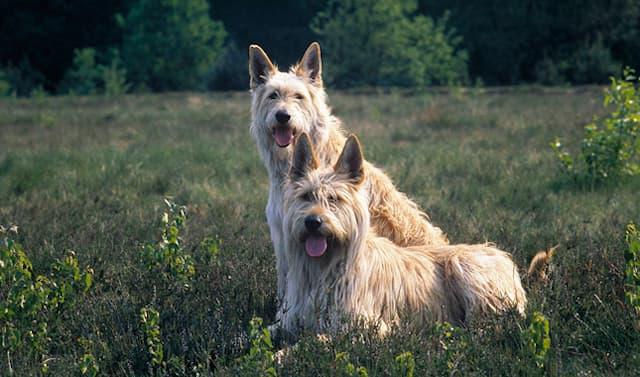 Mellow Dog Names