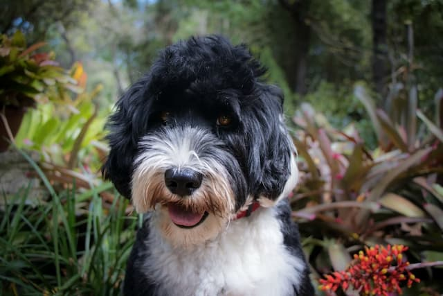 Portuguese Dog Names and Their Meanings