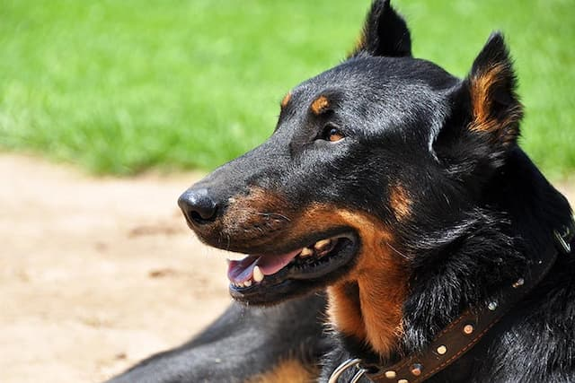Rescue Dog Names
