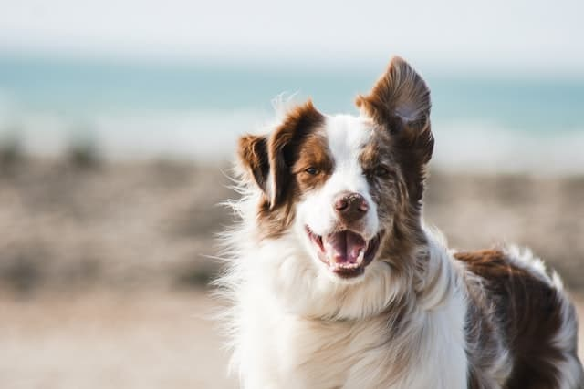Sassy Dog Names with Attitude for Male and Female Puppies