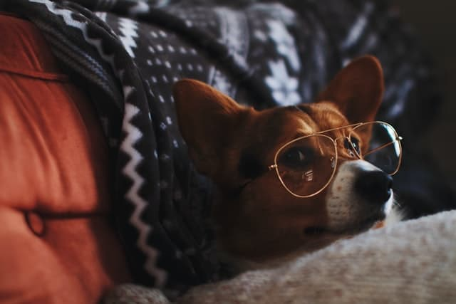 Sassy Dog Names with Attitude