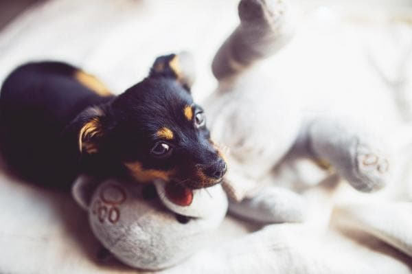 Short Dog Names for Male and Female Puppies