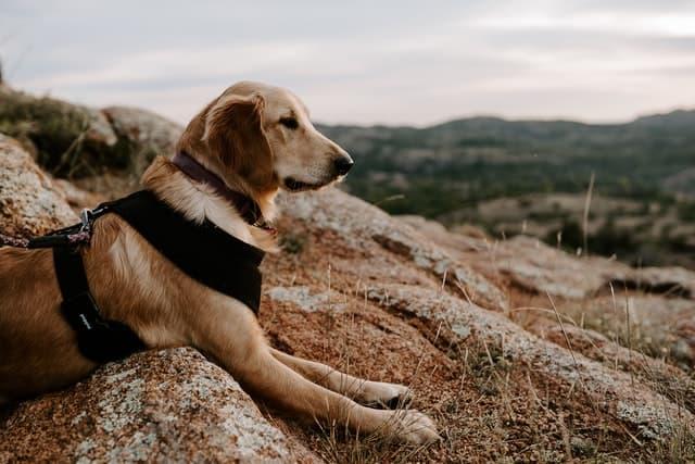 Thousands of Nature Dog Names
