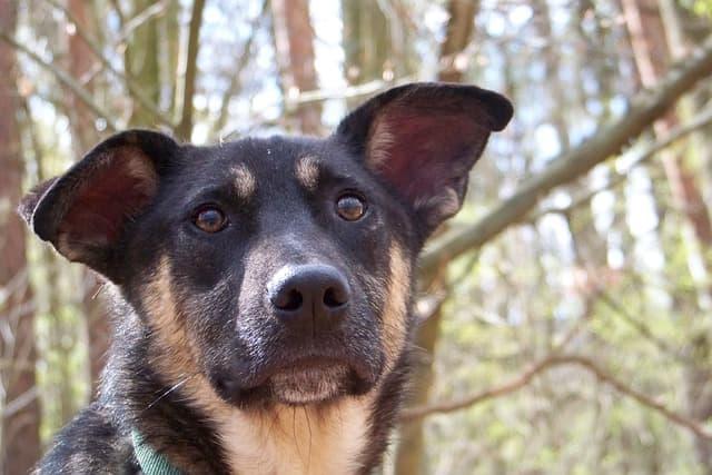 shy Gender Natural (Unisex) Dog Names Meaning Hope