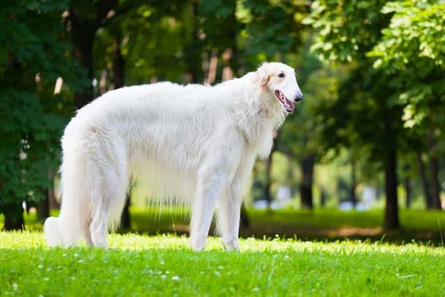 Badass Russian Dog Names