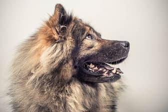 Boy Eurasier Names for Dogs