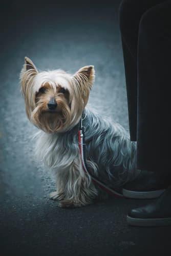 Cairn Terrier Girl Names