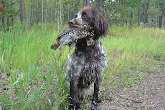 Cool Longhaired Pointer Names for Dogs
