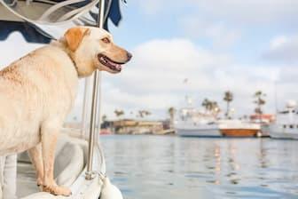 Dog Names that mean Ocean