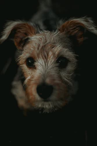 Famous Cairn Terrier Names