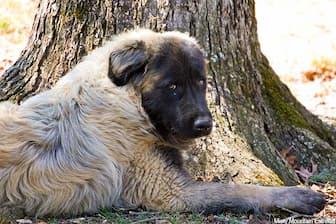 Female Estrela Mountain Names for Dogs