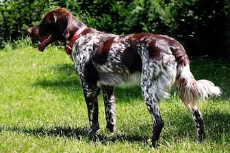 Female French Spaniel Names for Dogs